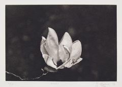 20141114165142-magnolia