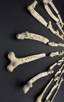 20141114174532-divination_bones__horizontal_-_extreme_side_view
