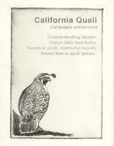 20141210231133-california_quail_1000