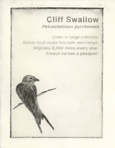 20141210231139-cliff_swallow_1000
