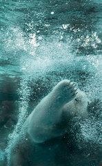 20150109174357-polar-bear-lincoln-park-zoo-nancy-bechtol-0065paw_wb