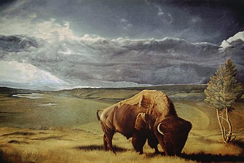 20150112133623-c0027_bison105_copy