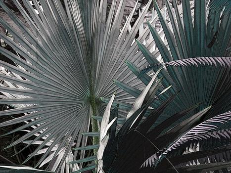 20150123021916-flora26a