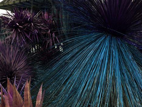 20150123024829-botanicalf