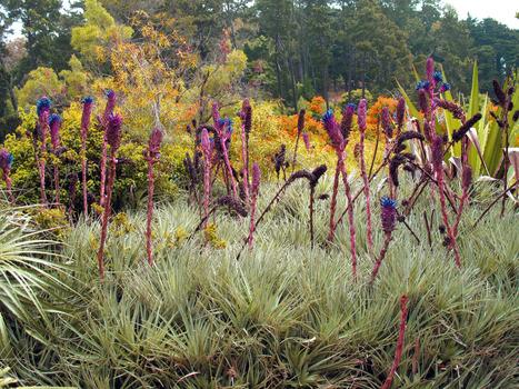 20150123024949-botanicale