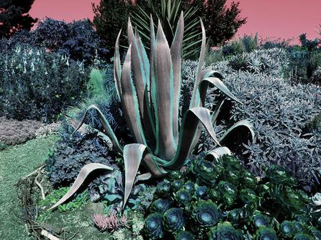 20150123024955-botanicali