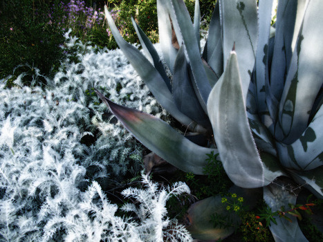 20150123025347-botanicals