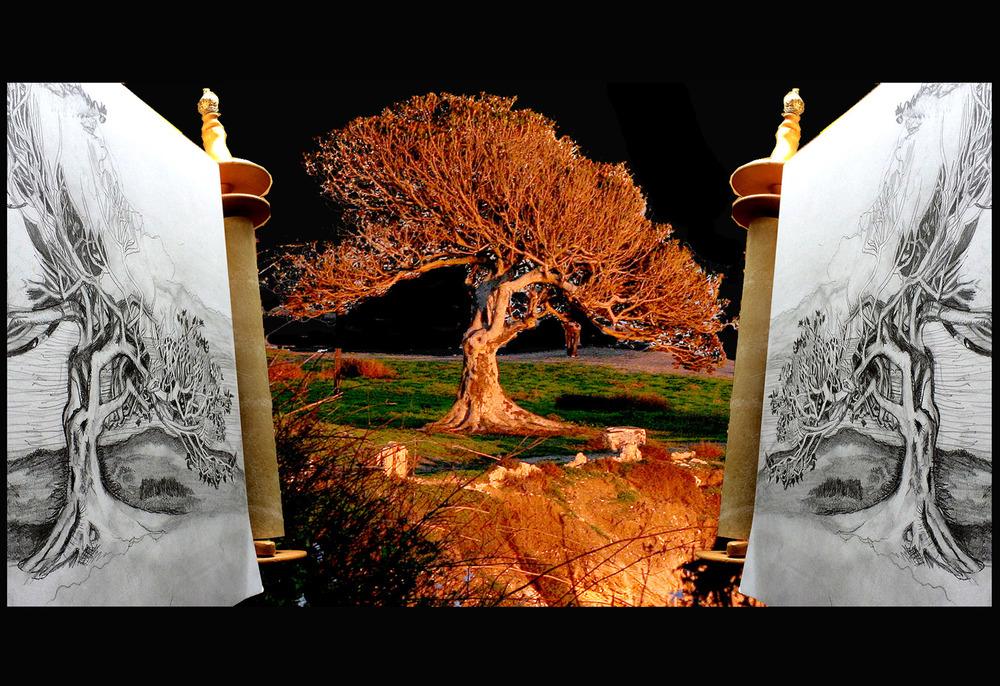 20150205075105-_double_torah_scrolled_pt_fermin_tree_blackened_back_web