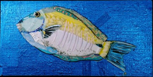 20150207225545-blue_and_yellow_doctorfish_2