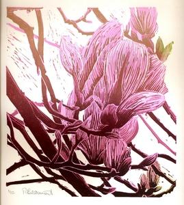 20150216222716-magnolia_flowers_feb_2014_low