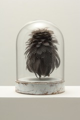 20150228033450-tcmoorebestiary_1_8_x12_feathers_wood_glass2014