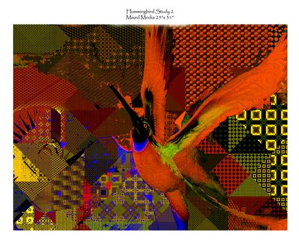 86-_humminbird_study_2