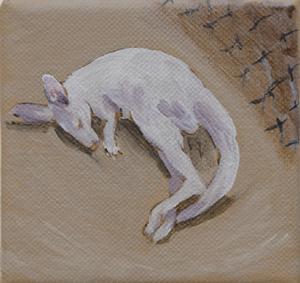 20150305074736-kangaroo