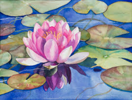 20150406165728-waterlily