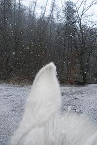 20150411165913-40_snow_a5_cropped_final_18x27_print0