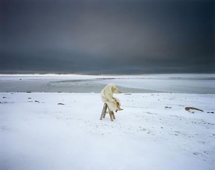 Polar_bear_2007