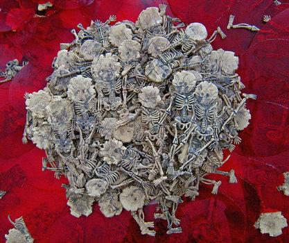 007corpseflowerdetailweb