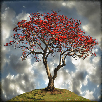 20150515033405-ana_phelps_-_coral_tree_-_photography_on_metal_aluminum_-_30_inches_x_30_inches_-___all_rights_reserved