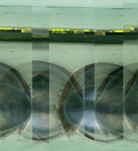 Nicole_landau_-_fish_eye_flat