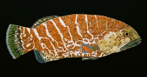 20150519214503-tiger_grouper