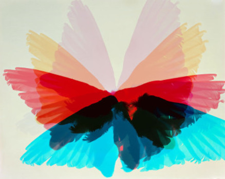 20150520172051-doug_fogelson_bird_wings