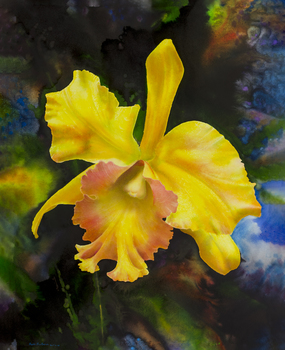 20150609022132-barbera__ross_-_yellow_orchid