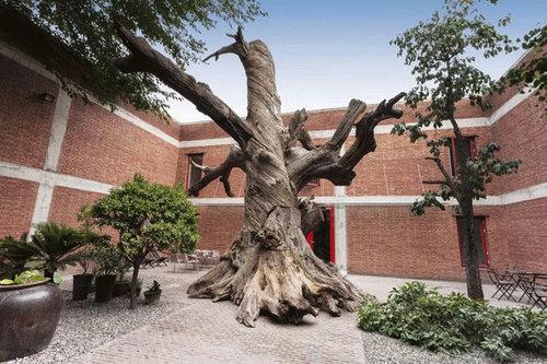 20150623143949-tree_aww
