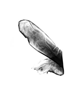 20150623175606-vestigialmembrane6