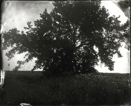 Elmaleh_treeinfieldwithflowers
