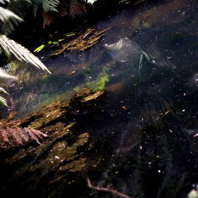 20150712161853-pondgalaxy