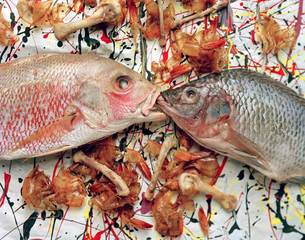 Pollockfish_semiclean2