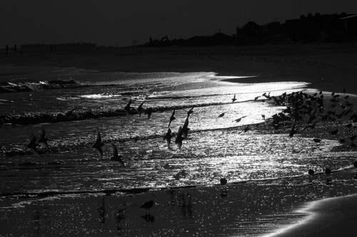 20150717144732-joseph_oneill_birds_on_the_beach