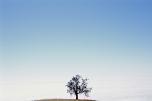 20150815214824-tree__6