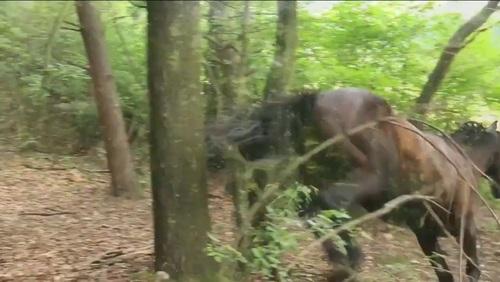 20150830131458-centaur_forest_ii_still_jumping_horse