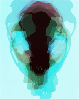 20150902191448-doug_fogelson_fox_skull