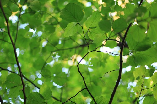 20150922195347-yoshiko-mori-422-trees-2-4