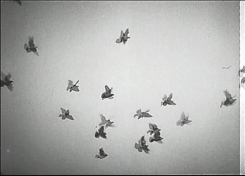 20150930084541-ivy_ma_still_from_bird___the_passion_of_joan_of_arc___carl_theodor_dreyer_2015_video_10_mins_courtesy_of_the_artist
