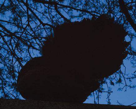 20151007161118-oiseau3