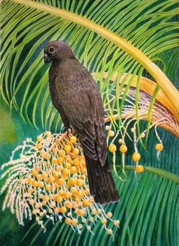20151015171333-black_parrot_001