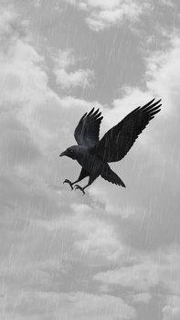 20151023215531-2015_raven_01