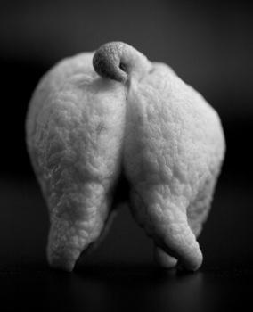 07_delgado_organic_manifesto_lemon