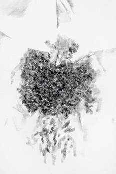 20151116165426-i-looked-at-the-pineapple-pencil-in-hand-and-wondered-who-was-lying-to-who-graphite-on-canvas-detail-1-683x1024