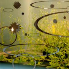 20151203212657-dunlevie_wetlands-150x150