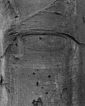 20160107212612-jw_shapes_on_a_tree_1998