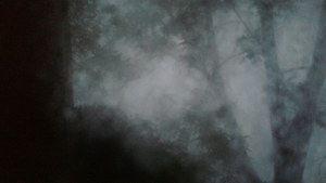 20160117094020-_in_a_darkening_wood_