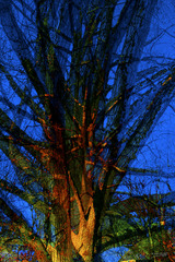 20160201204642-broken_tree_60x40_rotated