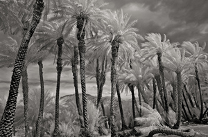 20160219043352-china_ranch_infrared