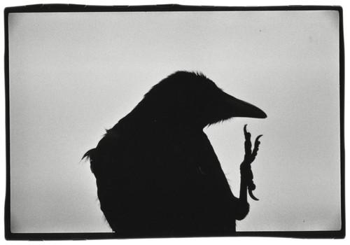 20160309170456-ravens020-s-