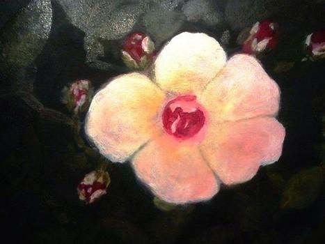 20160414064147-rose_cornelia