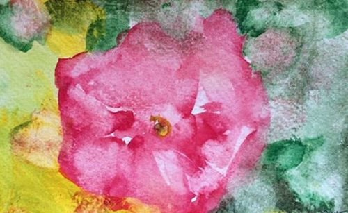 20160414070426-rose_i_rosariet_arboretet_2015
